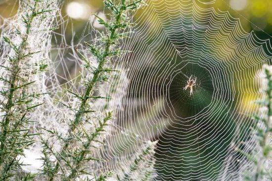 7 astuces pour se d barrasser des araign es naturellement. Black Bedroom Furniture Sets. Home Design Ideas